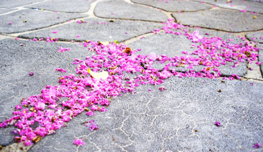 crush fell the pink petals