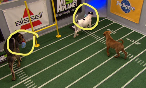 two dogs make the run into the end zone