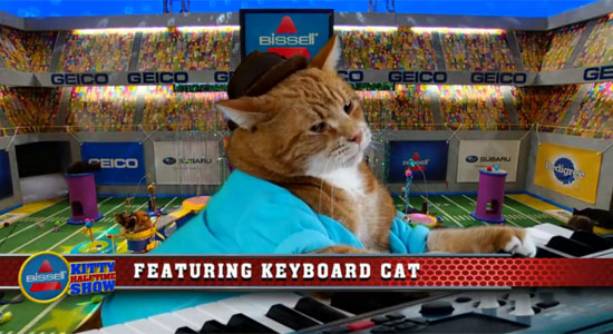 Keyboard Cat considers seppuku