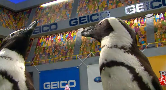 Penguin cheerleaders at Puppy Bowl X