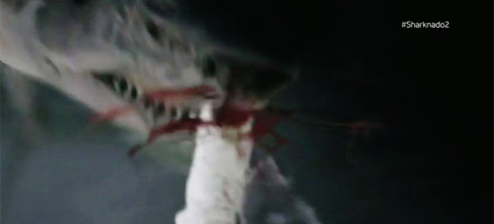 shark gets a gun handed to it